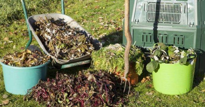 Внесение компоста для роз